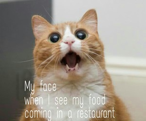 cat, funny, and food love image