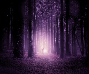 flickr, woods, and forest image