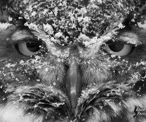 animal, b&w, and bird image