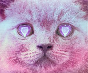 cat, pink, and diamond image