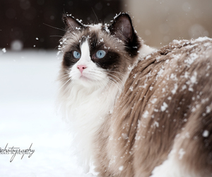 animals, beautiful, and snow image