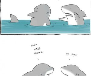 shark, funny, and lol image