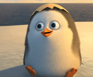 penguin, cute, and madagascar image