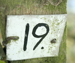19, nineteen, and 9teen image