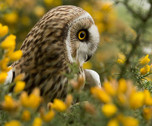 beautiful, owl, and owls image