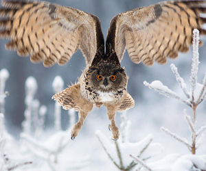owl, beautiful, and winter image