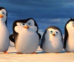 penguin, 5sos, and LUke image
