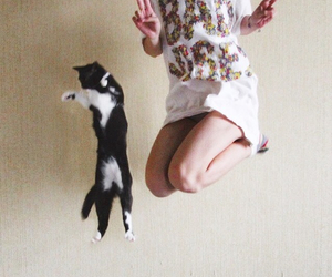 cat, girl, and jump image