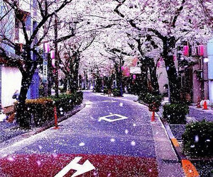 japan, purple, and sakura image