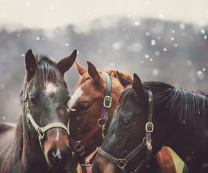 horse, snow, and animal image