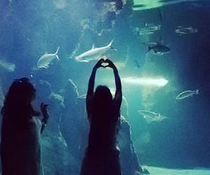 aquarium, heart, and Best image