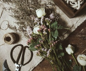 collection, flower, and flowers image
