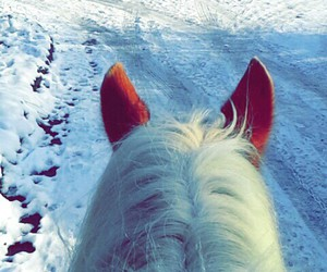 cold, free, and horse image