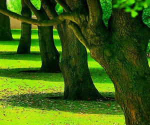photography, tree, and green image