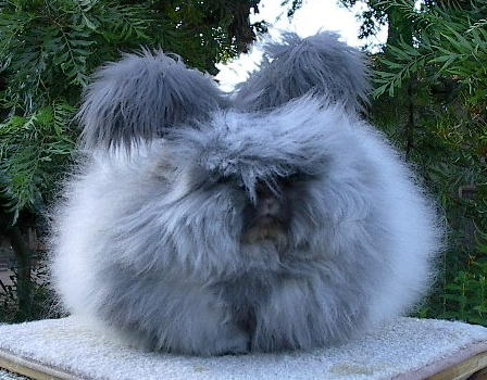 bunny and fluffy image