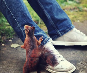 animals, shoes, and nike image