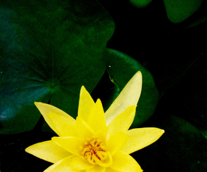 color, flowers, and moral image
