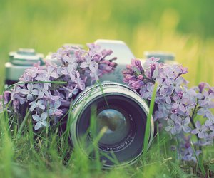 camera, nature, and flower image