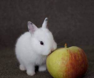 animals, photography, and bunny image