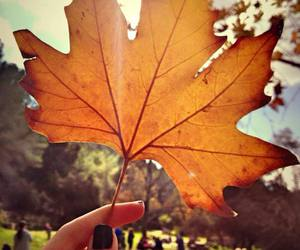 at, autumn, and beauty image