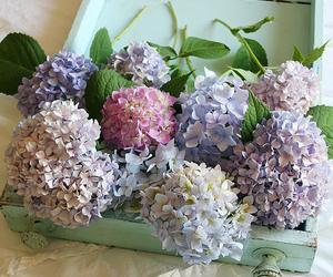 flowers, vintage, and hydrangea image