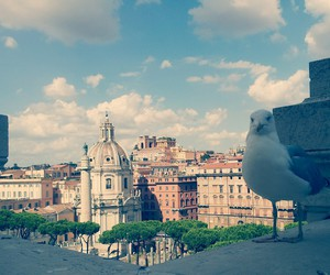 birdy, blue, and italy image