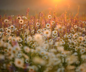 flowers, sun, and daisies image