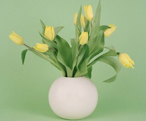 flowers, tulip, and yellow image
