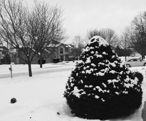 black and white, cold, and freezing image