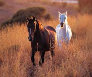 horse, horses, and cute image