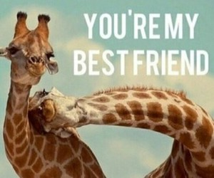 animals, Best, and friend image