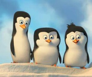 penguin, madagascar, and snow image