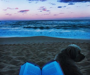 dog, book, and beach image