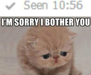 cat, grumpy, and dissing image
