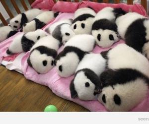 asleep, panda, and cute image