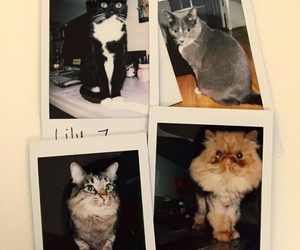 animal, cats, and meow image