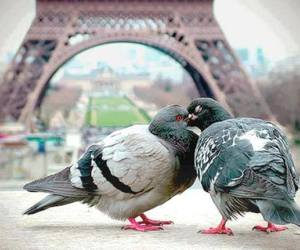 amor, beso, and aves image