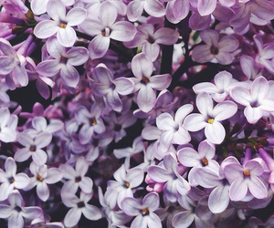flowers, purple, and pretty image