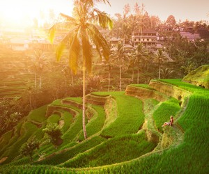 bali, blogger, and rice field image