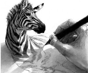 zebra, drawing, and art image