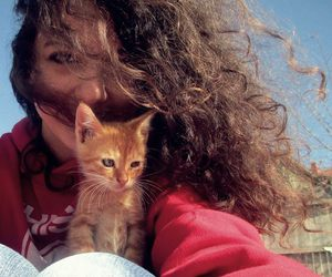 brown, cat, and curly image