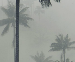 fog, palm trees, and photography image