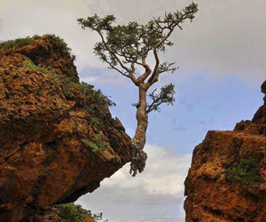 tree, nature, and awesome image