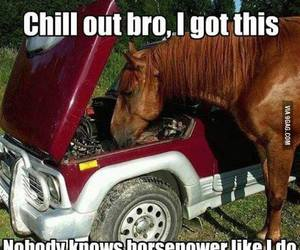 car, funny, and horse image