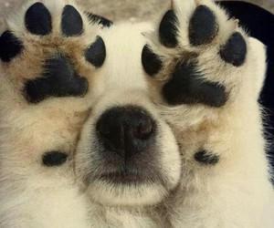 dog little image