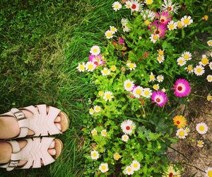 flowers, sweden, and swedish summer image