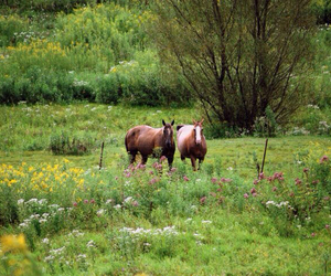 horses, pasture, and farm life image