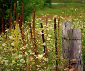 country living, Fences, and flowers image