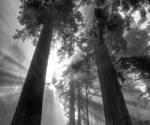 black and white, shadows, and nature image