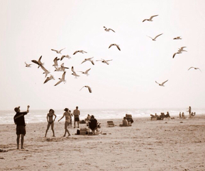 beach, birds, and blustery image